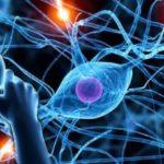 Nutrizione e Malattie neurologiche